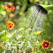 Watering flowers — Stock Photo #11439621