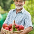 Gardener with a basket of ripe apples — Stock Photo #11440712