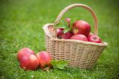 Fresh ripe apples in basket — Stock Photo