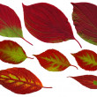 Separate leaves in autumn — Stockfoto