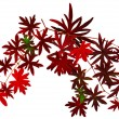 Stock Photo: Twigs with red autumn leaves white background