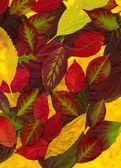 Textura de folhas coloridas em queda — Foto Stock