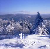 Sníh a jinovatka vysočině 01 — Stock fotografie