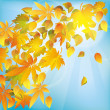 Autumn leaves, nature background — Stock Vector