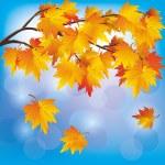 Autumn tree maple on blue background — Stock Vector #11494215