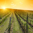 Stock Photo: Idyllic Sunset over vineyard hill