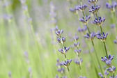 Soft lavender background with copy space — Stock Photo