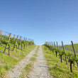Path leading through idyllic vineyard landscape — Stock Photo