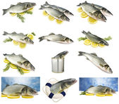 Collage of sea bass — Stock Photo