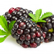 Blackberry - Stock Photo