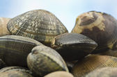 Clams and spices — Stock Photo