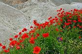 Desert and flowers 1 — Stock Photo