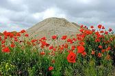 Deserto e fiori 2 — Foto Stock