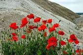 Desert and flowers 3 — Stock Photo