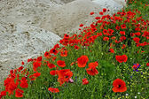 Desert and flowers 5 — Stock Photo