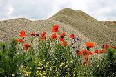 Desert and flowers 7 — Stock Photo