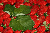 Strawberries 2 — Stock Photo