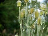 緑の花 — ストック写真