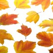 Autumn. Fall viburnum leaves — Stock fotografie