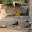Stock fotografie: Backyard in India