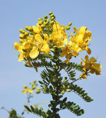 Yellow flower detail — Stock Photo