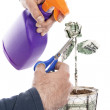 Taking care of economy — Stock Photo #10751113