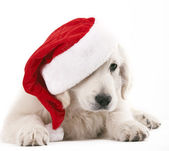 Christams dog — Stock Photo