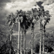 Palm under the cloudy sky - Stockfoto