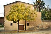 Maison avec deux arbres jaunes — Photo