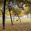 Chair and two dogs in autumn park — Stock Photo