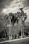 Palms in Barcelona — Stock Photo