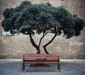 Tree behind the bench — Stock Photo