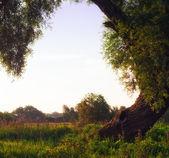 Mattina sotto l'albero — Foto Stock