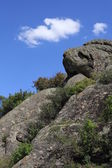 """""""Дикая природа"""". """"Каменный страж"""".""""Wildlife"""". """"Stone Guard"""". — Stock Photo"""