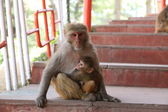 Monkey with baby — Stock Photo