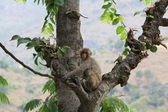 Posing monkey — Stock Photo