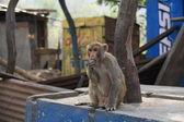 обезьяна сидит под дерево — Стоковое фото