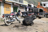 A sacred cow, mopeds, motorcycles and cars on the roads of India — Stock Photo