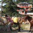 Stock Photo: Transportation of goods on donkeys and horses