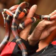 Stock Photo: Coral snake in hand