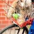 Dog in basket bike — Stock Photo