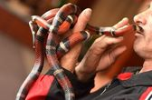 Coral snake in hand — Stock Photo