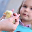 Portrait of a baby with chick — Stock Photo