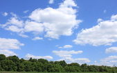 Summer forest against the blue sky — Stock Photo
