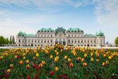 Belvedere sarayı viyana avusturya — Stok fotoğraf