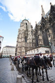 Horse carriage near St. Stephan Cathedral — Stock Photo