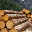 Timber logging in AustriAlps — Stock Photo #11249659