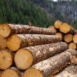 Stock Photo: Timber logging in AustriAlps