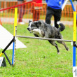 Border Collie in Agility Test — Stock Photo #10748529