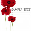 Poppy flowers isolated on white background — Stock Vector